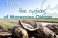 Taste the oysters of Marennes Oleron